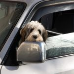 dog in car about to get towed